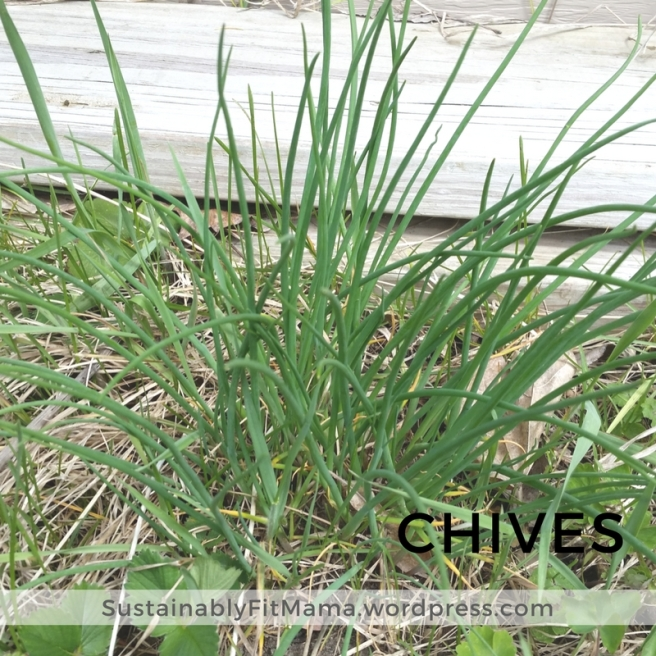 Chives | SustainablyFitMama.Wordpress.com